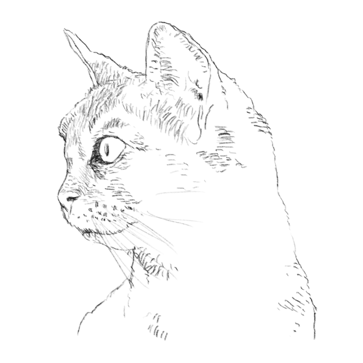 cat profile drawing
