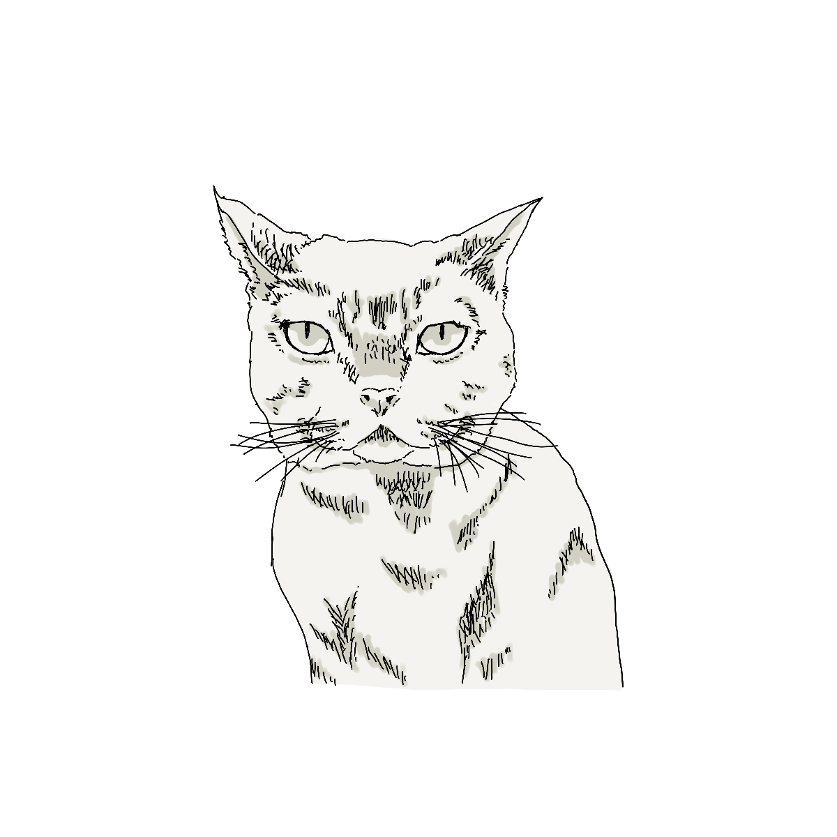 sharp-eyed cat drawing
