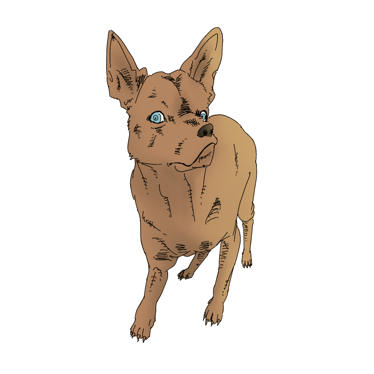 sharp-eyed dog drawing